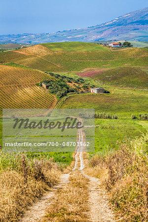 Scenic vista of farmland on rolling hills with dirt road near Calarafimi-Segesta in the Province of Trapani, in Sciliy, Italy
