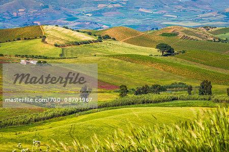 Scenic view of hills and farmland near Calatafimi-Segesta in the Province of Trapani in Sicily, Italy