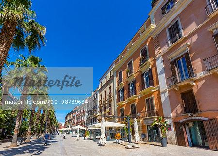 Palm Tree Lined Street in Bari, Puglia, Italy