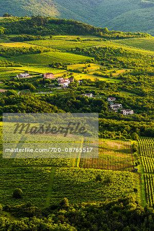 Overview of farmland and vineyards near Motovun in Istria, Croatia