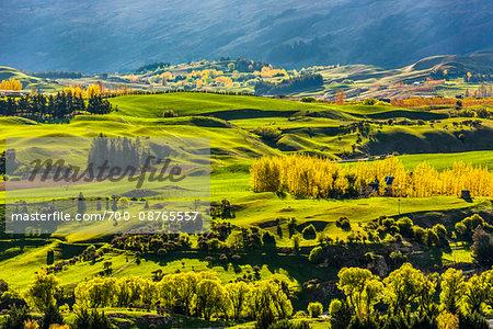 Sunlit, grassy fields of the Wakatipu Basin near Queenstown in the Otago Region of New Zealand