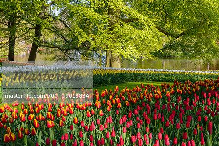 Garden view of colorfull Keukenhof tulip flower park, Keukenhof, Lisse, South Holland, Netherlands