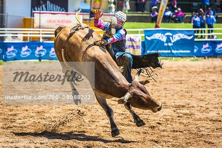 Bull riding at the Warwick Rodeo in Warwick, Queensland, Australia