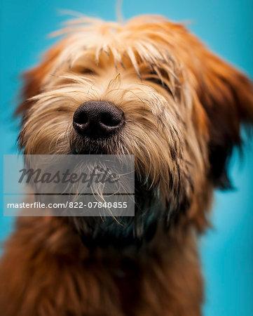 Furry Dog, Close-up view