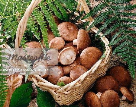 Basket of Shiitakes