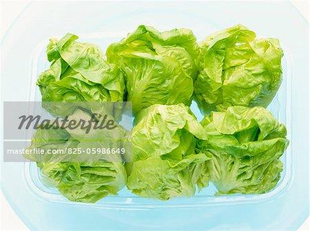 green lettuce in punnet