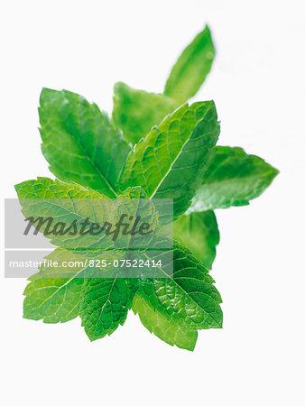 Cut-out fresh mint