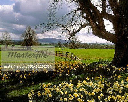Slievenamon, Ardsallagh, Co Tipperary, Ireland