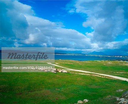 Sheep, Mannin Bay, Co Galway, Ireland