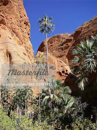 Palm trees at approach to Echidna chasm, Purnululu National Park, UNESCO World Heritage Site, Bungle Bungle, Kimberley, Western Australia, Australia, Pacific