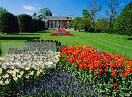Tulips and the Orangery, Kensington Palace, Kensington Gardens, London, England, UK