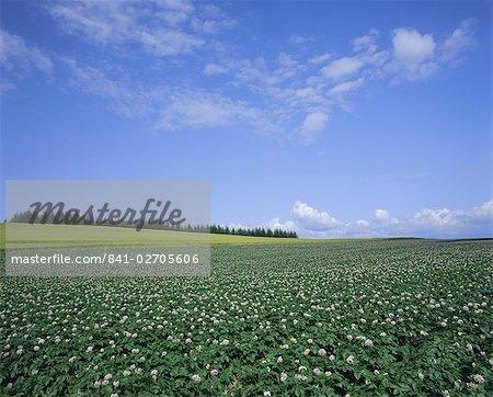 Potato and wheat fields near Furano, Hokkaido Island, Japan, Asia