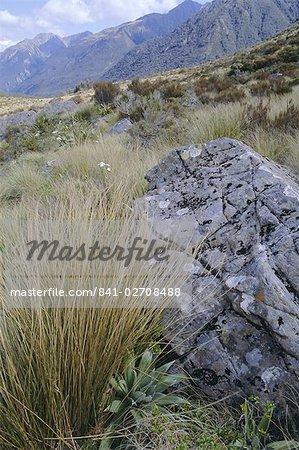 Dobson Nature Walk, Arthur's Pass, Canterbury, South Island, New Zealand, Pacific
