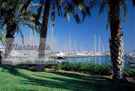 Palm trees and harbour, Puerto Portals, Mallorca (Majorca), Balearic Islands, Spain, Mediterranean, Europe
