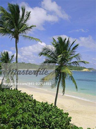 Palm trees and beach, Half Moon Bay, Antigua, Leeward Islands, Caribbean, West Indies, Central America