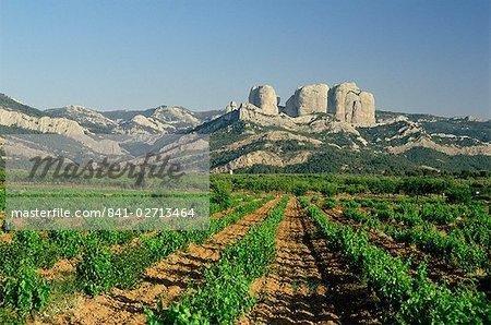 Vineyards of the Terra Alta, near Tarragona, Catalonia, Spain, Europe
