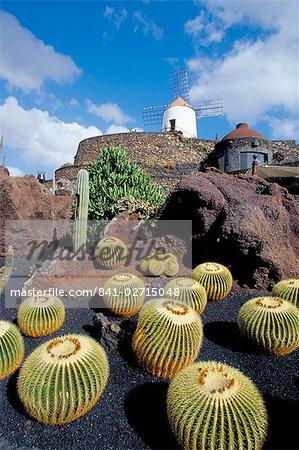 Cacti and windmill at Jardin de los Cactus, Cesar Manrique's work of art, Lanzarote, Canary Islands, Spain, Atlantic, Europe