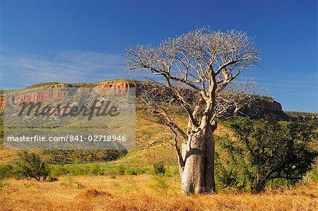 Boab tree and Cockburn Ranges, Kimberley, Western Australia, Australia, Pacific