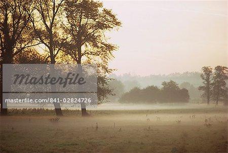 Mist, Essex, England, United Kingdom, Europe