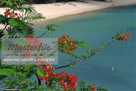 Grenada, Windward Islands, West Indies, Caribbean, Central America