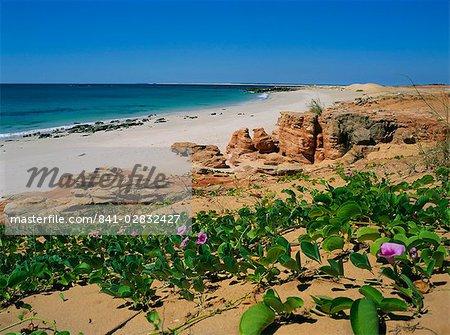 May flowring Ipomoea Pes Caprae Ssp Brasiliensis (convolvulus), Cape Leveque, Kimberley, Western Australia, Australia