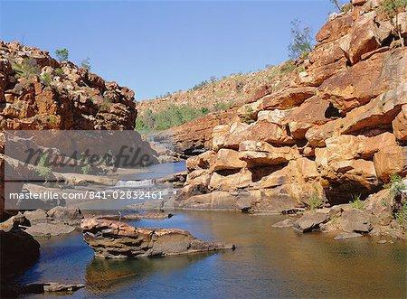 Heron on central rocks, Bell Creek Gorge, below main falls, Kimberley, Western Australia, Australia