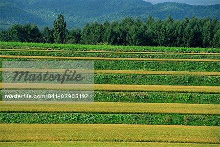 Landscape of rice terraces on the island of Hokkaido, Japan, Asia