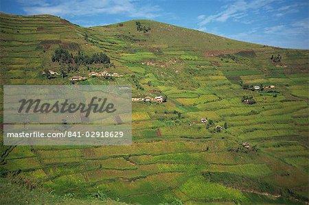 Terraced fields, near Kisoro, Uganda, East Africa, Africa