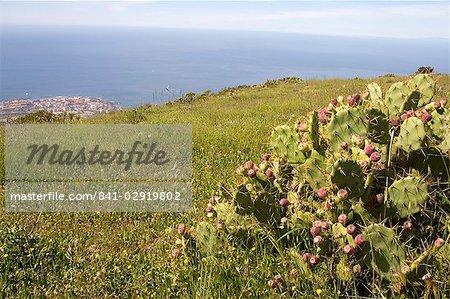 El Roque and succulent vegetation, with Playa de las Americas resort in the background, Arona, south west Tenerife interior, Canary Islands, Spain, Atlantic, Europe