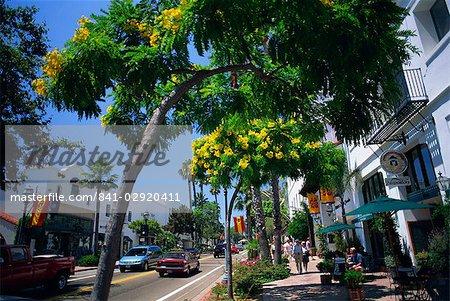 Flowering trees line the sidewalks of State Street in Santa Barbara, California, United States of America, North America