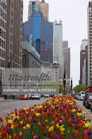 Spring tulips on North Michigan Avenue, Chicago, Illinois, United States of America, North America