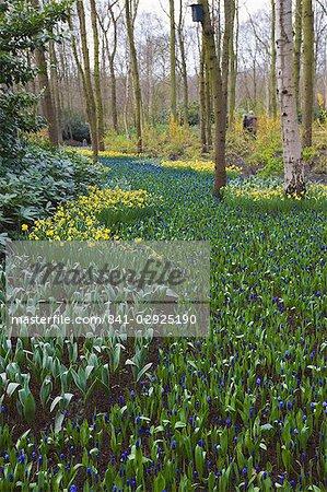 Early spring flowers, Keukenhof, park and gardens near Amsterdam, Netherlands, Europe
