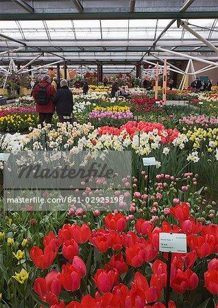 Displays of tulips, Keukenhof, park and gardens near Amsterdam, Netherlands, Europe