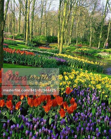 Flowering bulbs on display at the Keukenhof Gardens in Lisse, Holland, Europe