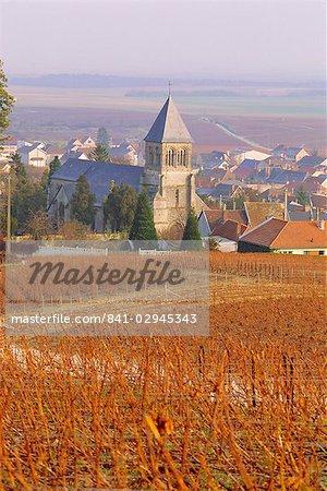 Vineyard, Le Mesnil sur Oger, Champagne, France, Europe