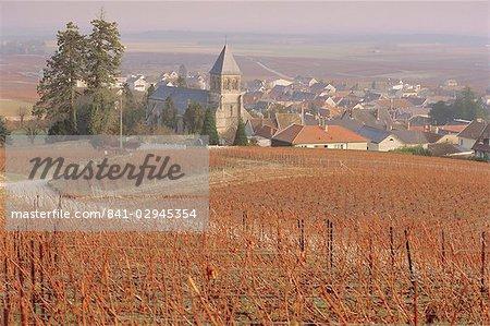 Vineyard, Le Mesnil sur Oger, France, Europe