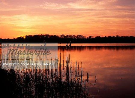 Reedmace silhouetted in foreground at sunset, Frensham Great Pond, near Farnham, Surrey, England, United Kingdom, Europe
