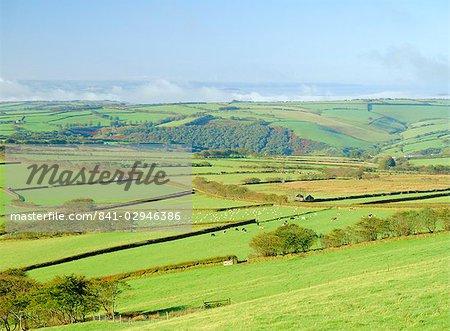 Earling morning mist drifting across fields of sheep on the edge of Exmoor National Park, Exmoor from Shoulsbarrow Common, Challacombe, Exmoor, Devon, England, United Kingdom, Europe
