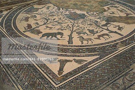 Mosaic floor, Volubilis, UNESCO World Heritage Site, Morocco, North Africa, Africa