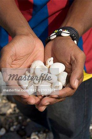 Shells found on beach, Sao Vicente, Cape Verde Islands, Africa