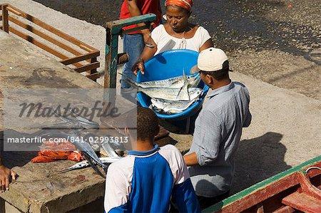 Gutting fish at the port of Ponto do Sol, Ribiera Grande, Santo Antao, Cape Verde Islands, Atlantic, Africa