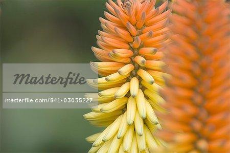 Flowers in Lorro Park,Tenerife,Canary Islands,Spain,Atlantic,Europe