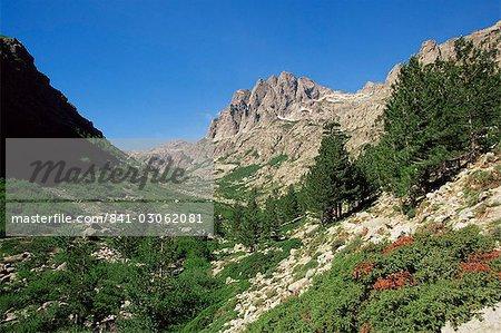 Gorges de la Restonica, Bergerie de Grottelle, Corsica, France, Europe