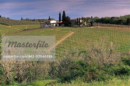 Vineyards at San Donato, Chianti, Tuscany, Italy, Europe