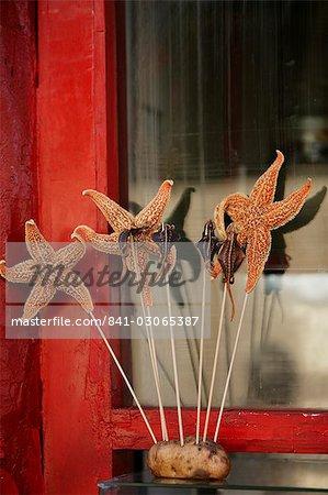 Chinese food, starfish, Beijing, China, Asia