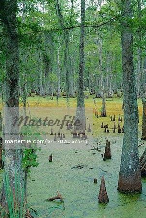 Cajun country, Atchatalaya Swamp, near Gibson, Louisiana, United States of America