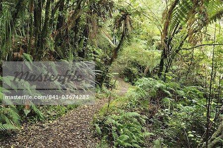 Native Forest, Lake Mahinapua, West Coast, South Island, New Zealand, Pacific