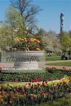 Spring display of tulips, Regent's Park, London NW1, England, United Kingdom, Europe