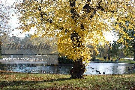 Autumn colours near the boat house, Regent's Park, London NW1, England, United Kingdom, Europe