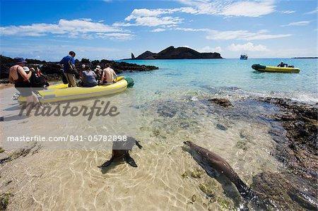Sealion and tourist boat, Sullivan Bay, Isla Santiago, Galapagos Islands, UNESCO World Heritage Site, Ecuador, South America